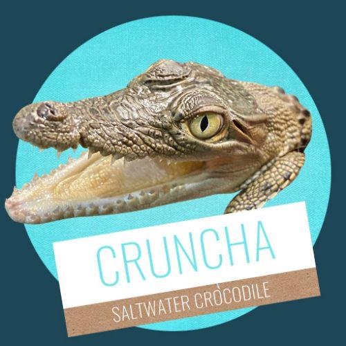 Cruncha